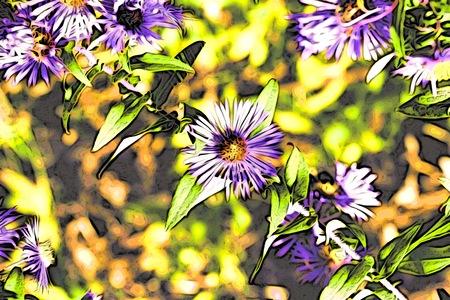 Wildflower: wildflower garden