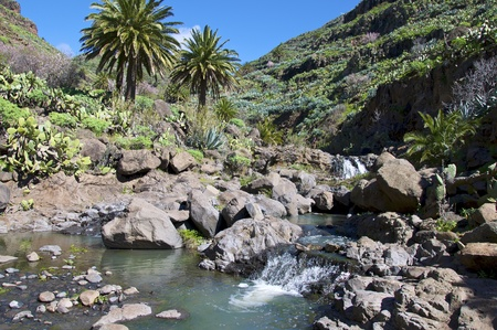 a beautiful stream with palm trees in the mountains of la gomera