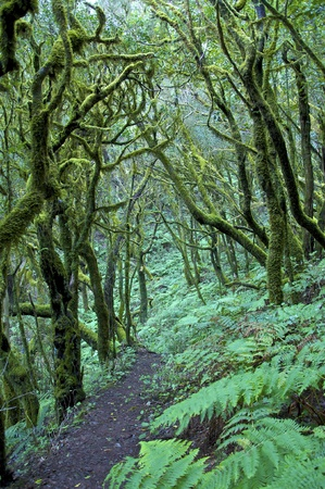 laurel forest on the island of la gomera in the atlantic Stock Photo