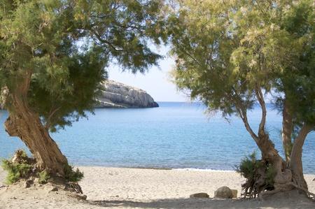 tamarisk am strand von matala, crete