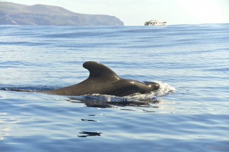 Whale watching near La Gomera, Canary Islands