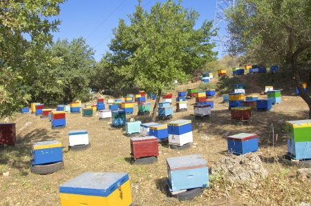 Beekeeping on Crete  Thyme honey is a speciality from the mountain region in the south of Crete photo