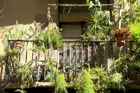 Flowers and plants on the balcony in the district Ravel in Barcelona   photo