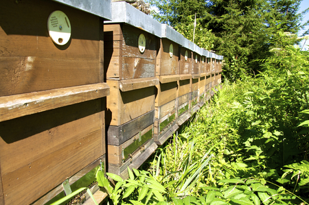 upper austria: Beekeeping in Upper Austria. Forest Honey from Bees in the Austrian Limestone Alps