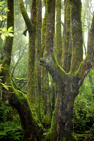 The Cloud Forest Garajonay on La Gomera is a UNESCO World Heritage Site