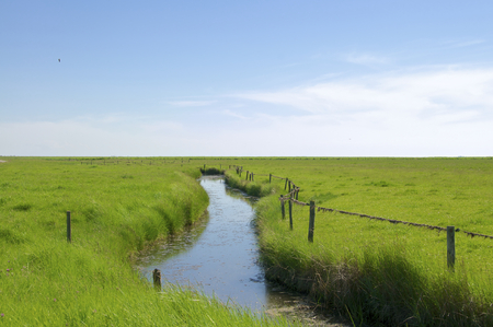 the wadden sea: Creek on the Hallig Langeness. The Hallig is located in the wadden sea in the north sea