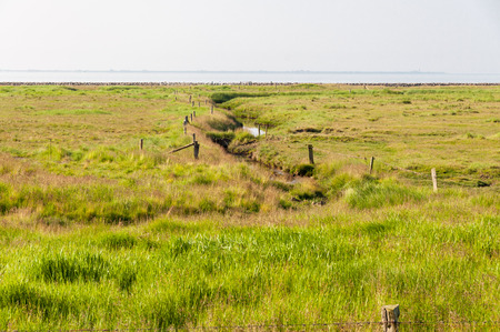 lowlands: Creek on the Hallig Langeness. The Hallig is located in the wadden sea in the north sea