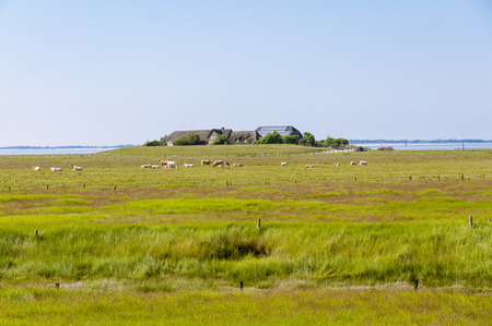 Thatched Houses on the Warft on the Hallig Langeness in north Friesland Stock Photo