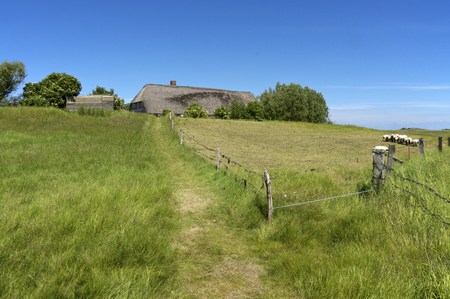 salt marsh: Fishermans cottage on a Warft on the Hallig Langeness in the wadden Sea in the north of Germany Editorial