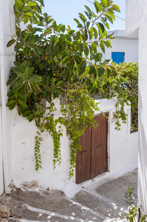 location shot: Plants in the Street of Hora Sfakion on Crete. It is a tourist spot on the south coast of Crete. Stock Photo
