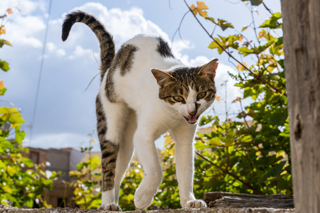 Cats arch Their backs When They are afraid, When They play and When They just need a good stretch