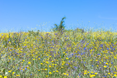 Beautiful wildflowers on the hillside in the foothills of the Ida mountains on Crete.
