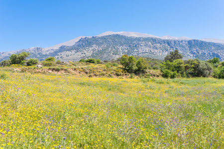 Beautiful wildflowers on the hillside in the foothills of the Ida mountains on Crete