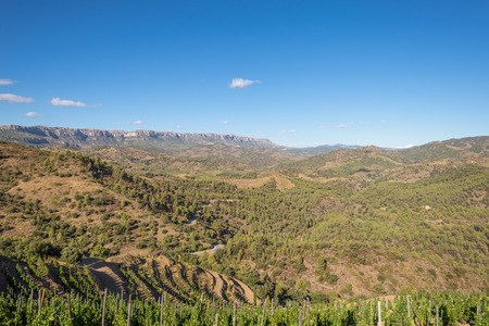 The Comarca Priory is a famous wine growing area where the prestigious Wine of the Priorat and Montsant is produced. Wine has been cultivated here since the 12th century Banque d'images