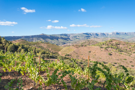 The Comarca Priory is a famous wine growing area where the prestigious Wine of the Priorat and Montsant is produced. Wine has been cultivated here since the 12th century Stock Photo