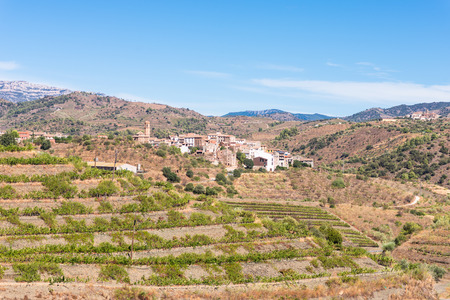 Vineyard in the village of El Lloar, in the Comarca Priorat, a famous wine-growing area where the prestigious wine of the Priorat and Montsant is produced.