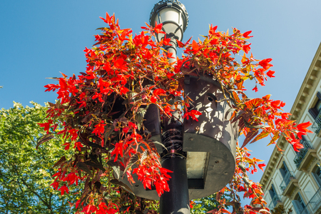 Flowerpots on lamppost in Donostia San Sebastian close to the Giputzkoa Plaza. The city is beautiful decorated with flowers, flowerpots and greenery. San Sebastian is European Capital of Culture 2016 Standard-Bild - 116701757