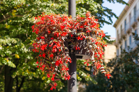 Flowerpots on lamppost in Donostia San Sebastian close to the Giputzkoa Plaza. The city is beautiful decorated with flowers, flowerpots and greenery. San Sebastian is European Capital of Culture 2016 Stock Photo