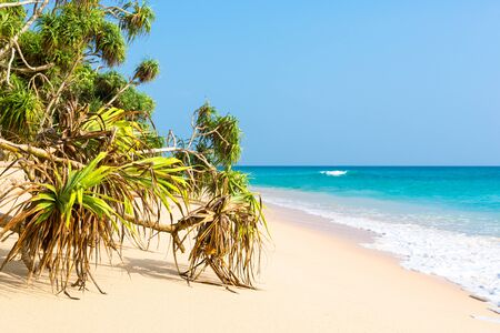 Tropical beach with fine sand, pandanus and coconut trees near the small town Koggala in the south of Sri Lanka