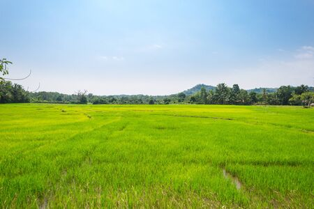 Big plain with paddy fields approx 30km far from the sea, upcountry in the southern Province of Sri Lanka