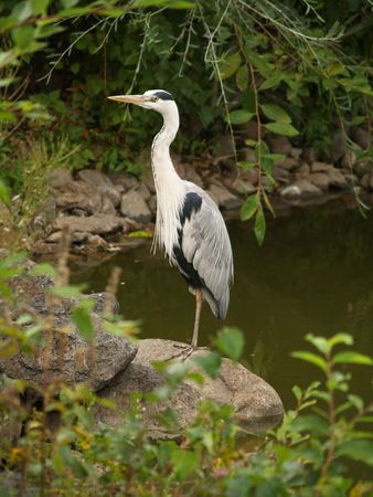 The lonely stork costs in wood on the bank of lake. photo