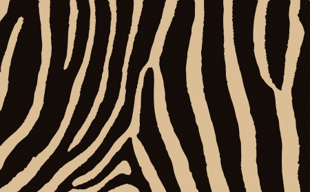 Colorful Animal Skin Textures Of Zebra   Wild Pattern Illustration