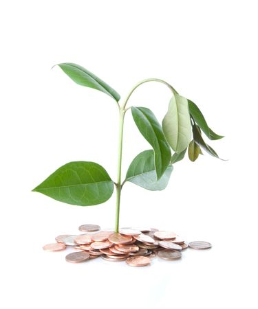drooping: Drooping money tree in coin soil