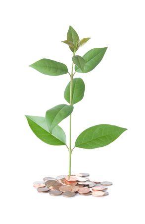Tree growing in fertile coin soil Stok Fotoğraf