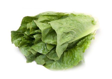 Head of romaine lettuce Stock Photo