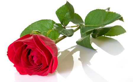Single red rose with stem and leaves