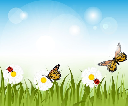 Butterflies and ladybirs on a dausy and poppies meadow Vector