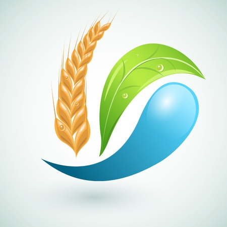 Agro symbol with leaf an wheat Vector
