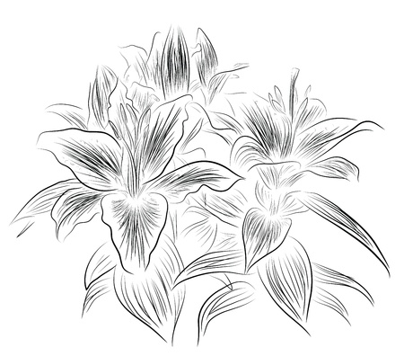 pencil plant: Lily flower sketch Illustration