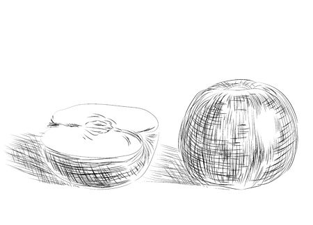 Sketch of apples Vector