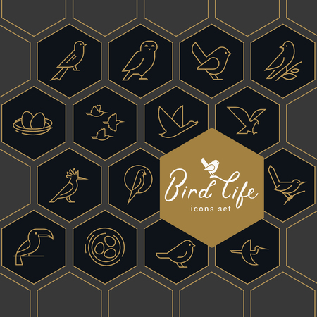 Vector icon set of icons inscribed in honeycombs on the theme of the wild life of birds. Early birds in a linear style on a dark background. Design concept. Stock Photo - 124627143