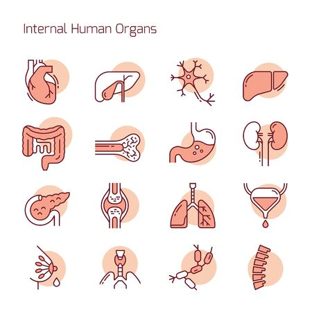 Set of color linear vector icons of human internal organs. Suitable for print, web and presentations. Ilustração