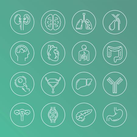 Large set of linear vector icons of human internal organs in circles. Suitable for print, web, and presentations.