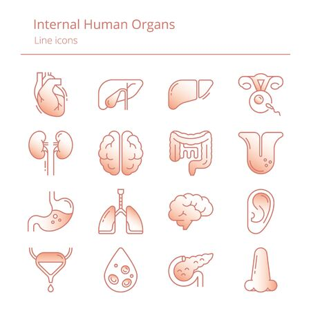 Set of color linear vector icons of human internal organs with shading gradients. Suitable for print, web and presentations.