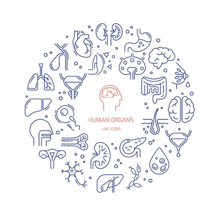 Circular template of linear vector icons of human internal organs and skeleton on a medical theme. Иллюстрация