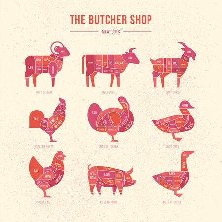 Vector meat cuts. Set a schematic view of animals for the butcher shop. Cow and pork, cattle and pig, chicken and lamb, beef and rabbit, duck and swine, goose and turkey, meat illustration.
