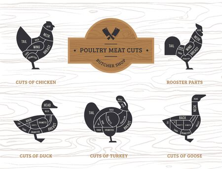Vector diagram cut carcasses chicken, turkey, goose, duck. Set a schematic view of animals for the butcher shop.