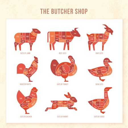 Vintage restaurant meat menu template. American scheme of pork cuts, chicken cuts and beef cuts, hand-drawn vector illustration.