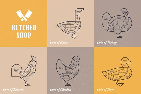 Vector diagram cut carcasses chicken, turkey, goose, duck. Set a schematic view of animals for the butcher shop. Ilustração Vetorial