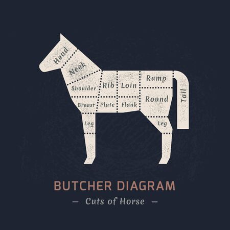 The diagram of cutting a horse made in a vector in a flat vintage style against the background of old paper and a signature at the bottom of an isolated illustration. Ilustração