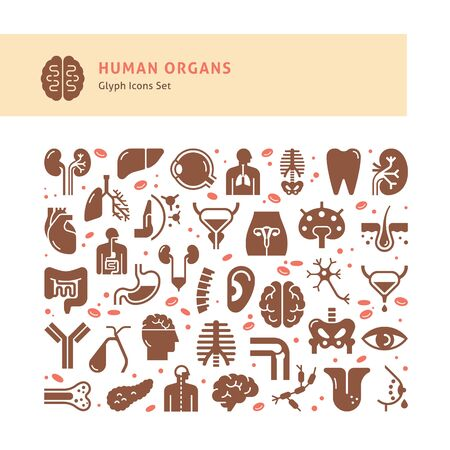 Set of 24 vector icons of internal human organs in a linear style isolated with background of seamless medicine pattern.