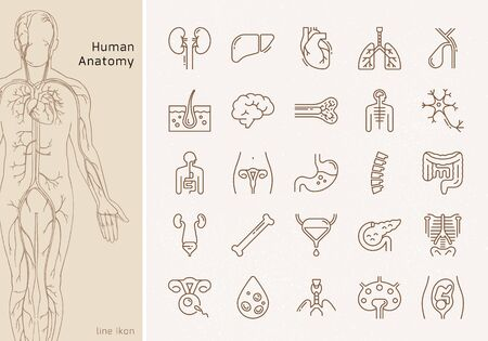 Large set of linear vector icons of human internal organs with signatures. Suitable for print, web and presentations.