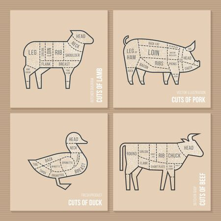 The vector scheme cuts sheep, pork, duck and beef in a hand-drawn illustration in a vintage style for a butchers menu or restaurant. Ilustração