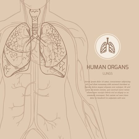 Medical banner template with place for text with the human body vector illustration and linear icon of human internal organs in highlighted lungs in the illustration.