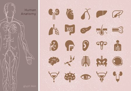 Large set of linear vector icons of human internal organs with signatures. Suitable for print, web and presentations. Illustration