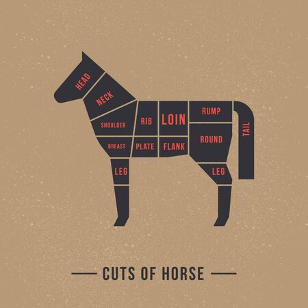 The diagram of cutting a horse made in a vector in a flat vintage style against the background of old paper and a signature at the bottom of an isolated illustration. Ilustrace